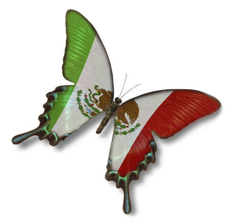 Mexican flag on butterfly isolated on white photo