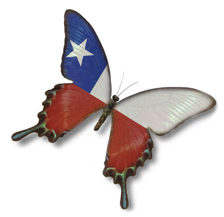 Chile flag on butterfly isolated on white Фото со стока
