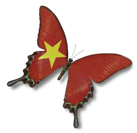 Vietnam flag on butterfly isolated on white photo