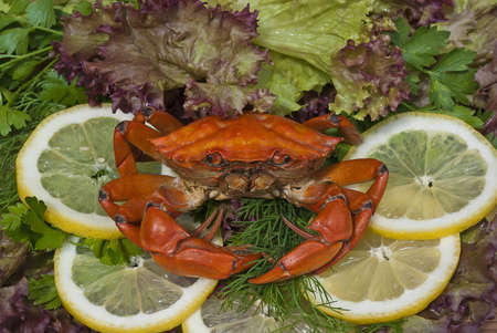 Crab meal on vegetables close up photo