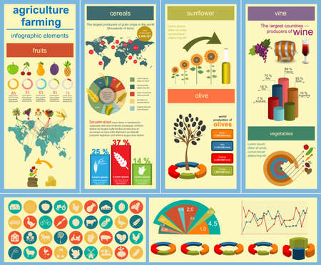 olive farm: Agriculture, farming infographics. Vector illustration