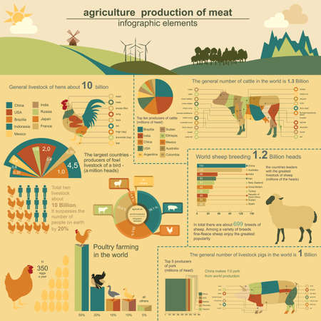 Agriculture, animal husbandry infographics, Vector illustrationstry info graphics. Vector illustration Vector