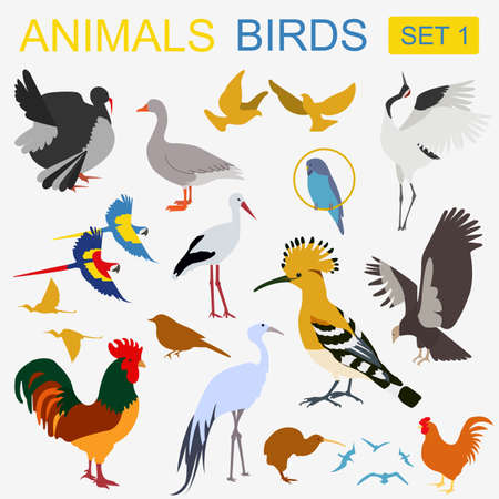 condor: Birds icon set. Vector flat style. Vector illustration
