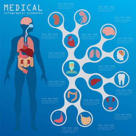 higado humano: Infografía médica y cuidado de la salud, los elementos para la creación de infografías. Ilustración vectorial