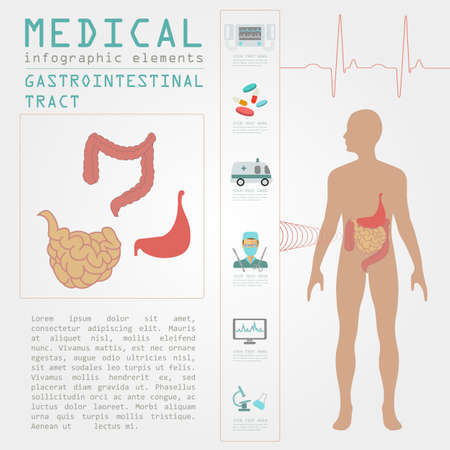 Medical and healthcare infographic, gastrointestinal tract infographics. Vector illustration Vector