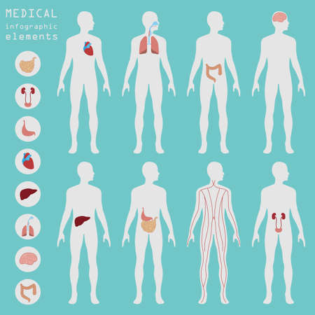 kidney: Medical and healthcare infographic, elements for creating infographics. Vector illustration