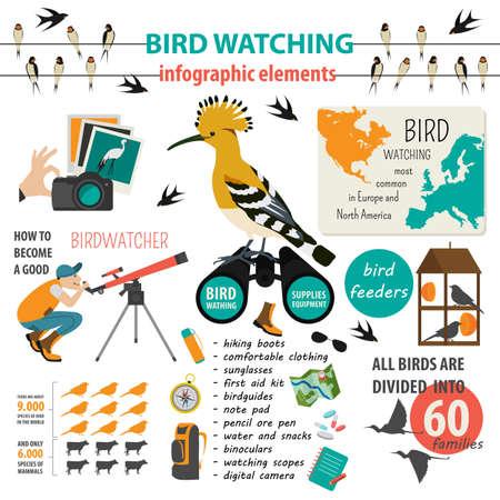 watching: Bird watching infographic template. Vector illustration