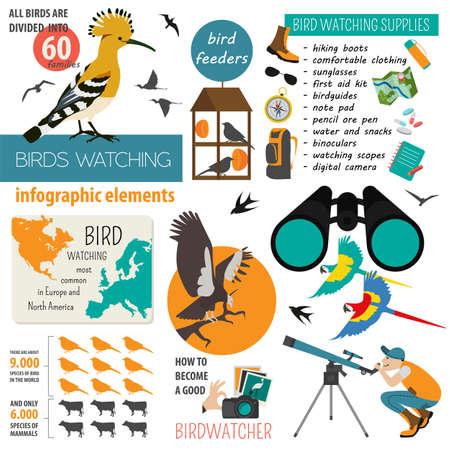 bird watching: Bird watching infographic template. Vector illustration