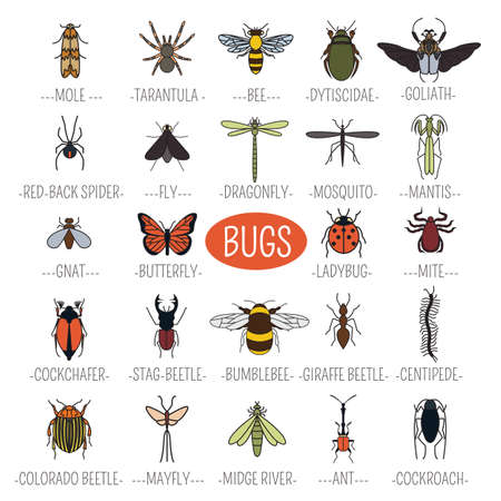 mantis: Insects icon flat style. 24 pieces in set. Colour version. Vector illustration