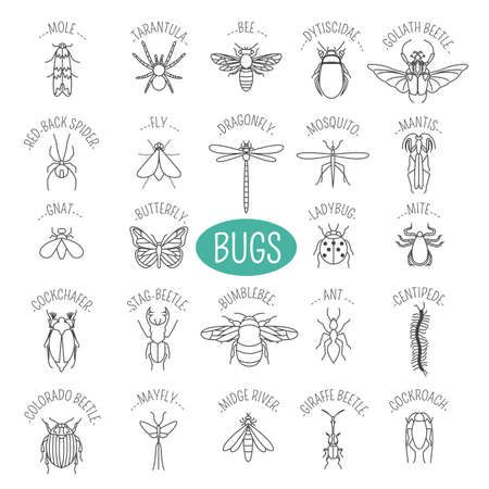mantis: Insects icon flat style. 24 pieces in set. Outline version. Vector illustration