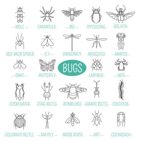 gnat: Insects icon flat style. 24 pieces in set. Outline version. Vector illustration