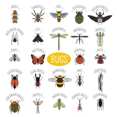 goliath: Insects icon flat style. 24 pieces in set. Colour version. Vector illustration