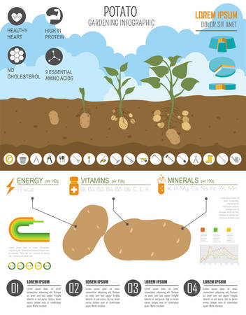 travaux de jardinage, l'agriculture infographique. Pomme de terre. modèle graphique. Appartement design de style. Vector illustration