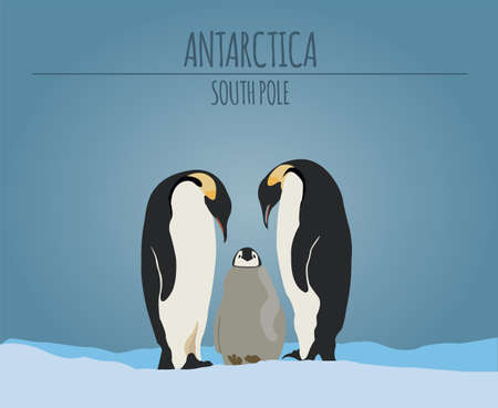 south pole: Antarctica (South Pole) graphic template. Vector illustration