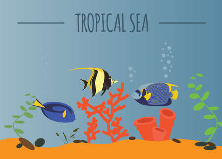 moorish idol: Tropical sea graphic template. Vector illustration