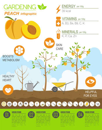organic farming: Gardening work, farming infographic. Peach. Graphic template. Flat style design. Vector illustration Illustration