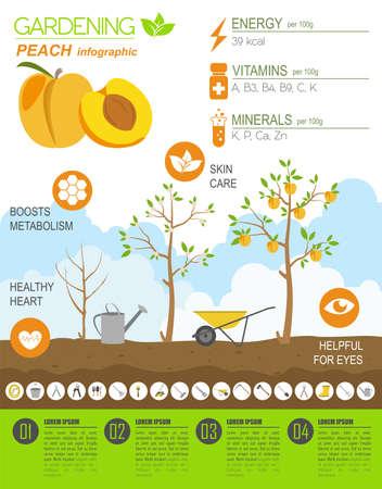 gardening work: Gardening work, farming infographic. Peach. Graphic template. Flat style design. Vector illustration Illustration