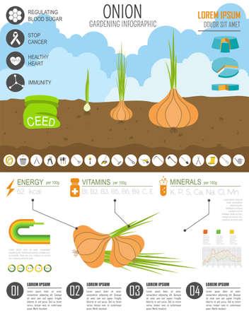 gardening work: Gardening work, farming infographic. Onion, Graphic template. Flat style design. Vector illustration Illustration