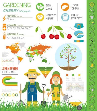 gardening work: Gardening work, farming infographic. Cherry. Graphic template. Flat style design. Vector illustration Illustration