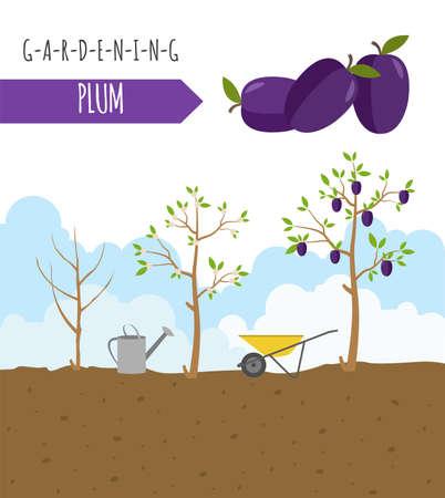 Gartenarbeit, Landwirtschaft Infografik. Pflaume. Grafik-Vorlage. Wohnung Stil Design. Vektor-Illustration