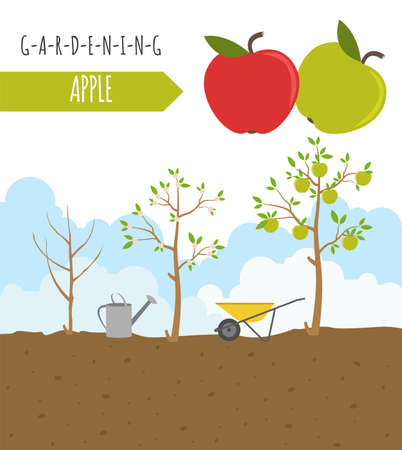 gardening work: Gardening work, farming infographic. Apple. Graphic template. Flat style design. Vector illustration Illustration