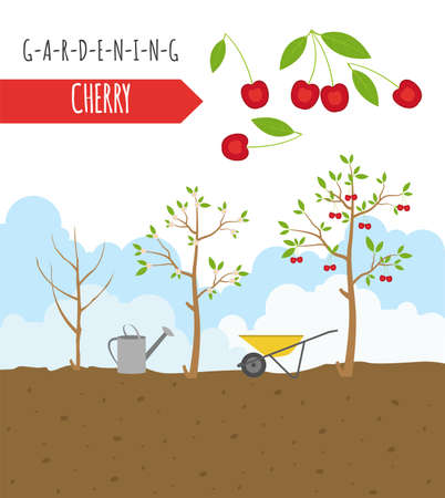 spring bed: Gardening work, farming infographic. Cherry. Graphic template. Flat style design. Vector illustration Illustration