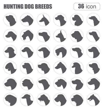 Honden rassen. Jachthond set icoon. Vlakke stijl. vector illustratie