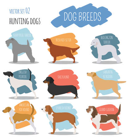 cynology: Dog breeds. Hunting dog set icon. Flat style. Vector illustration