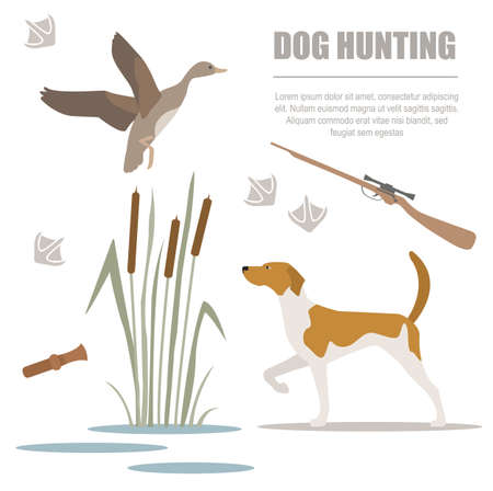 cynology: Dog hunting. Flat style. Vector illustration Illustration