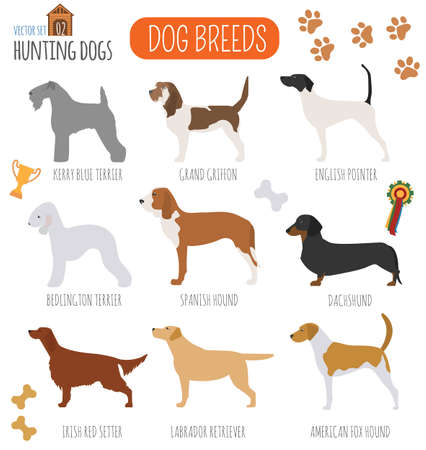 griffon: Dog breeds. Hunting dog set icon. Flat style. Vector illustration