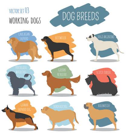cynology: Dog breeds. Working (watching) dog set icon. Flat style. Vector illustration Illustration