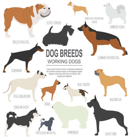 Dog breeds. Working (watching) dog set icon. Flat style. Vector illustration Vettoriali