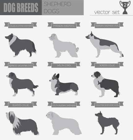 pyrenean mountain dog: Dog breeds. Shepherd dog set icon. Flat style. Vector illustration Illustration