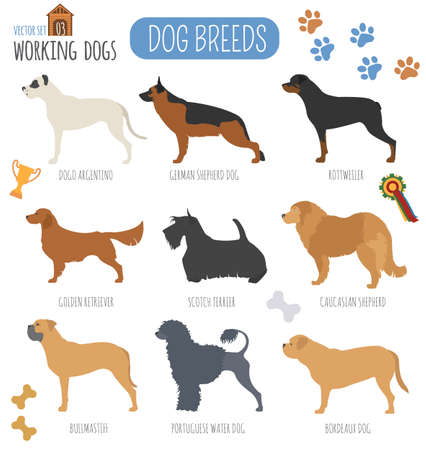 newfoundland: Dog breeds. Working (watching) dog set icon. Flat style. Vector illustration Illustration