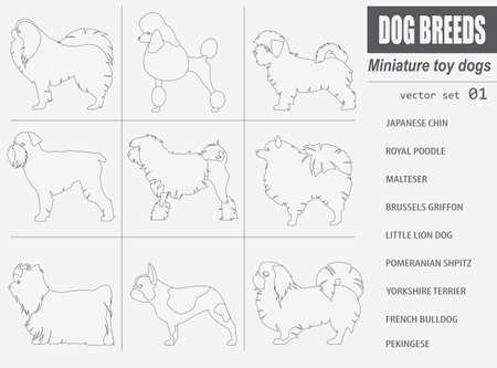 pekingese: Dog breeds. Miniature toy dog set icon. Flat style. Vector illustration Illustration