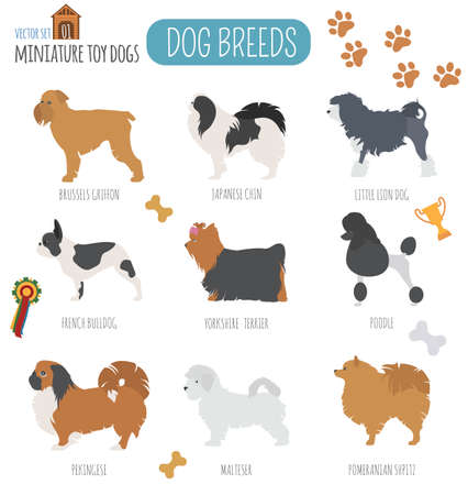 boston terrier: Dog breeds. Miniature toy dog set icon. Flat style. Vector illustration Illustration