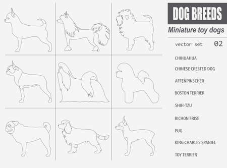 brussels griffon: Dog breeds. Miniature toy dog set icon. Flat style. Vector illustration Illustration