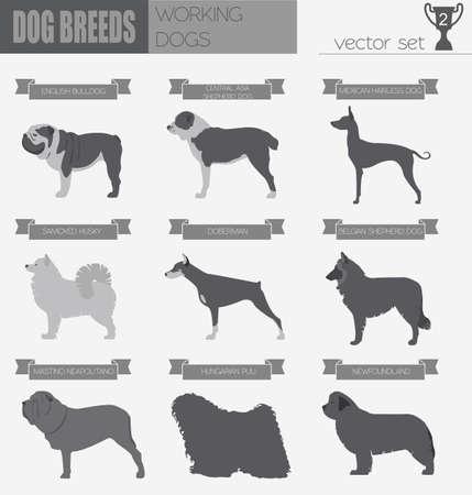 akita: Dog breeds. Working (watching) dog set icon. Flat style. Vector illustration Illustration