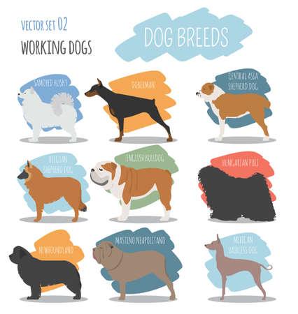 saint bernard: Dog breeds. Working (watching) dog set icon. Flat style. Vector illustration Illustration