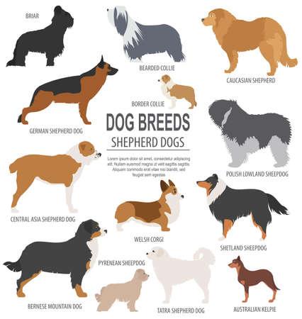 Dog breeds. Shepherd dog set icon. Flat style. Vector illustration Illustration