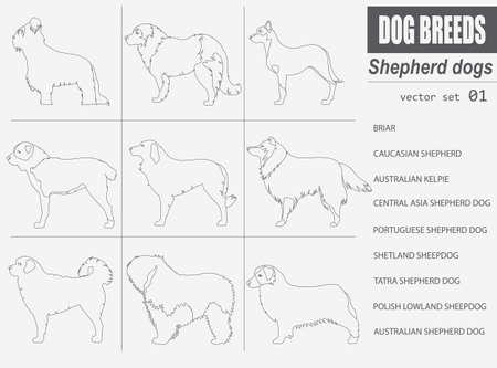 Honden rassen. Herdershond set icoon. Vlakke stijl. vector illustratie