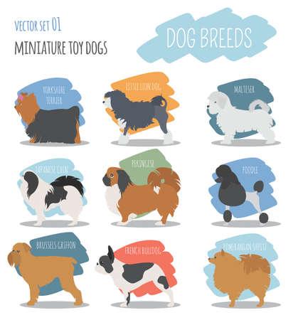 cynology: Dog breeds. Miniature toy dog set icon. Flat style. Vector illustration Illustration
