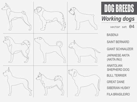 bull mastiff: Dog breeds. Working (watching) dog set icon. Flat style. Vector illustration Illustration