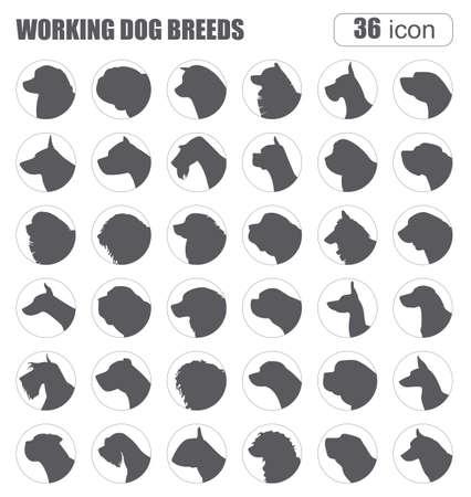 great dane: Dog breeds. Working (watching) dog set icon. Flat style. Vector illustration Illustration