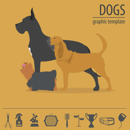 bull mastiff: Dog info graphic template. Heatlh care, vet, nutrition, exhibition. Vector illustration