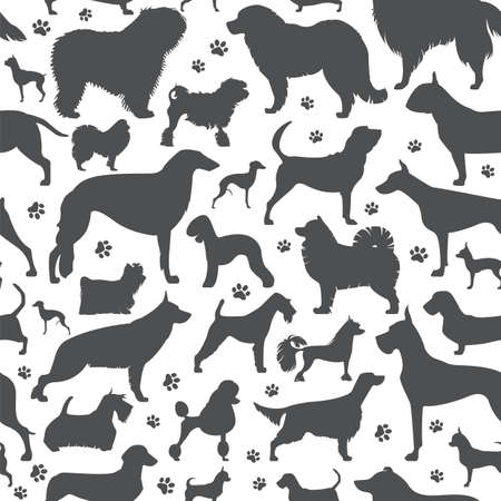 miniature collie: Dog seamless pattern. Heatlh care, vet, nutrition, exhibition. Vector illustration
