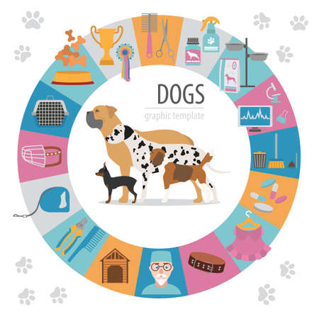 miniature collie: Dog info graphic template. Heatlh care, vet, nutrition, exhibition. Vector illustration