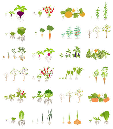 nutrition icon: Fruits and vegetables. Nutrition. Icon set. Vector illustration