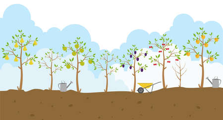 apricot tree: Fruit trees. Garden. Icon set. Vector illustration
