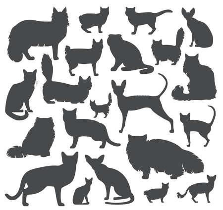 Cat races icon set de style plat. Vector illustration